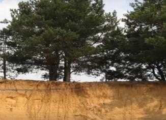 пласт почвы