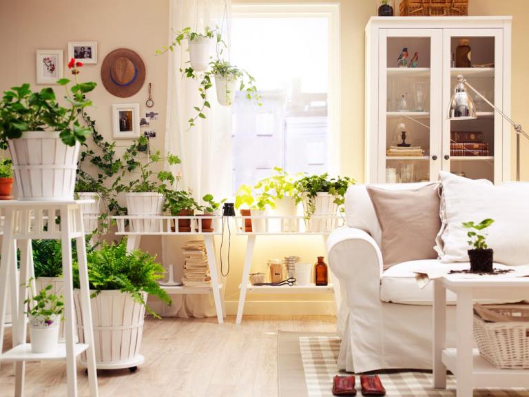 Цветы в квартире для интерьера