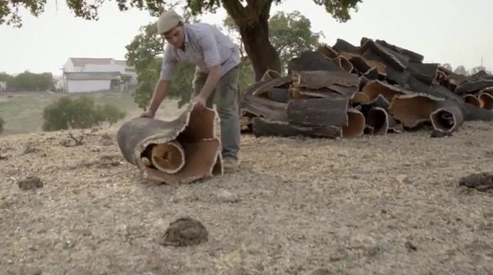 дерево для пробки