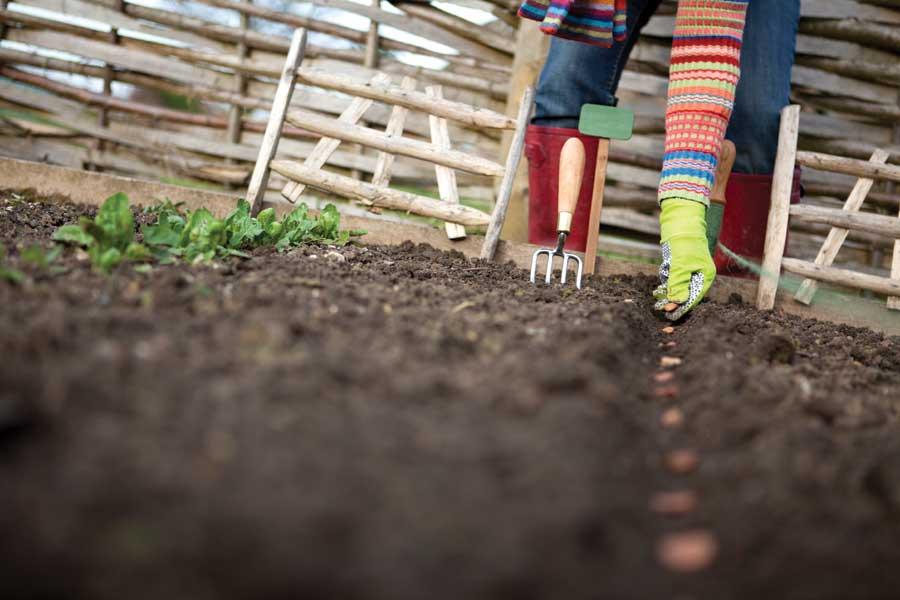 посев на огороде