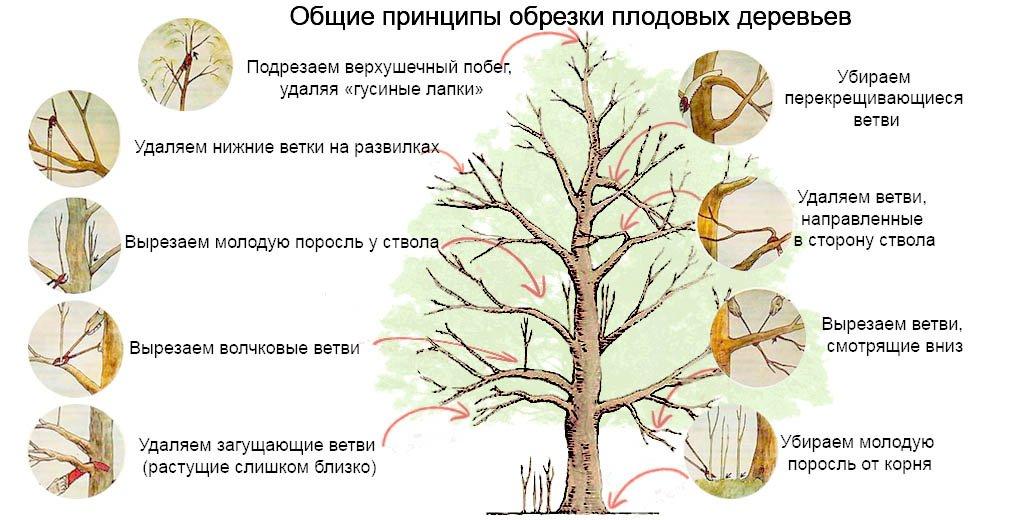 что обрезать у дерева