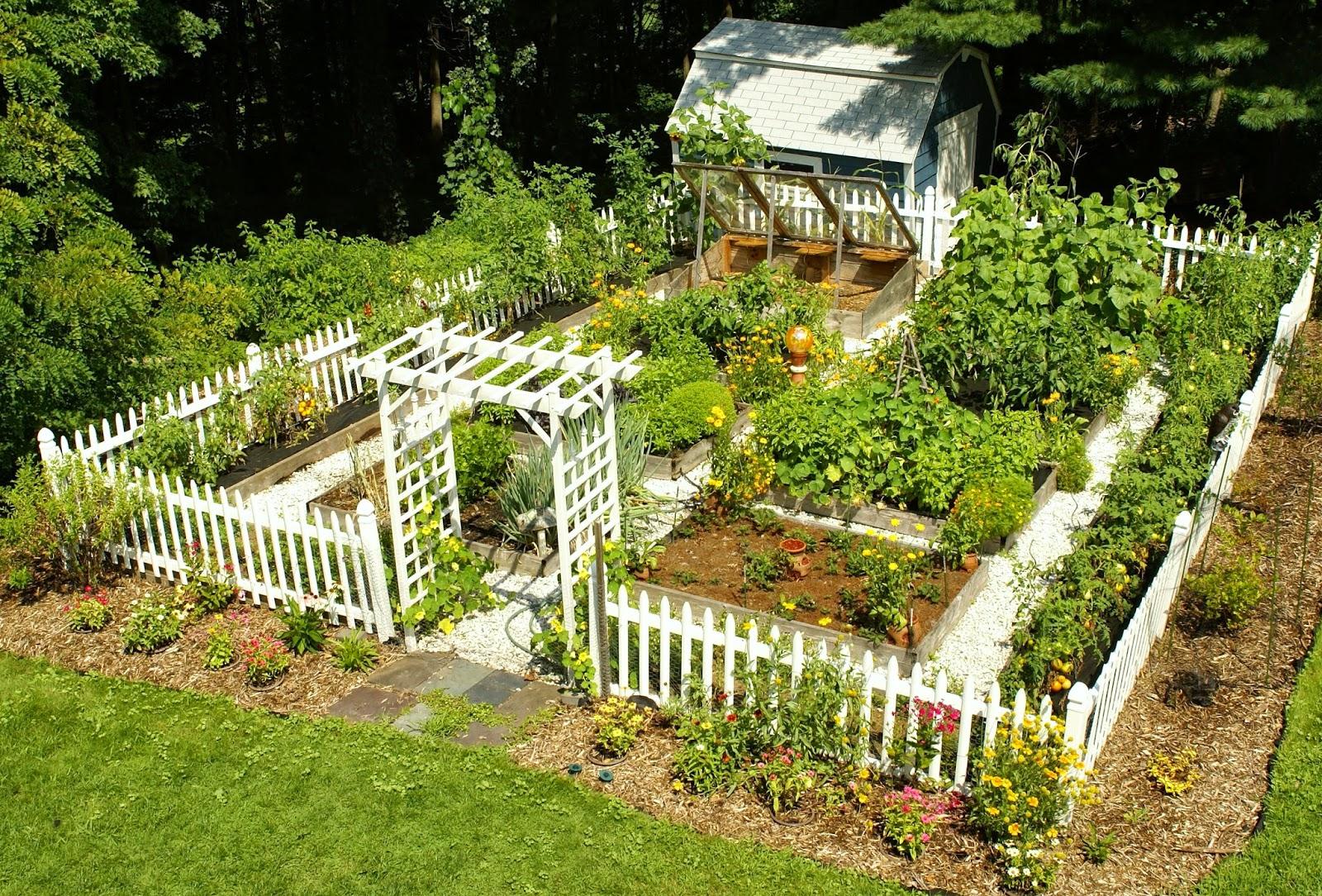 огород мечты