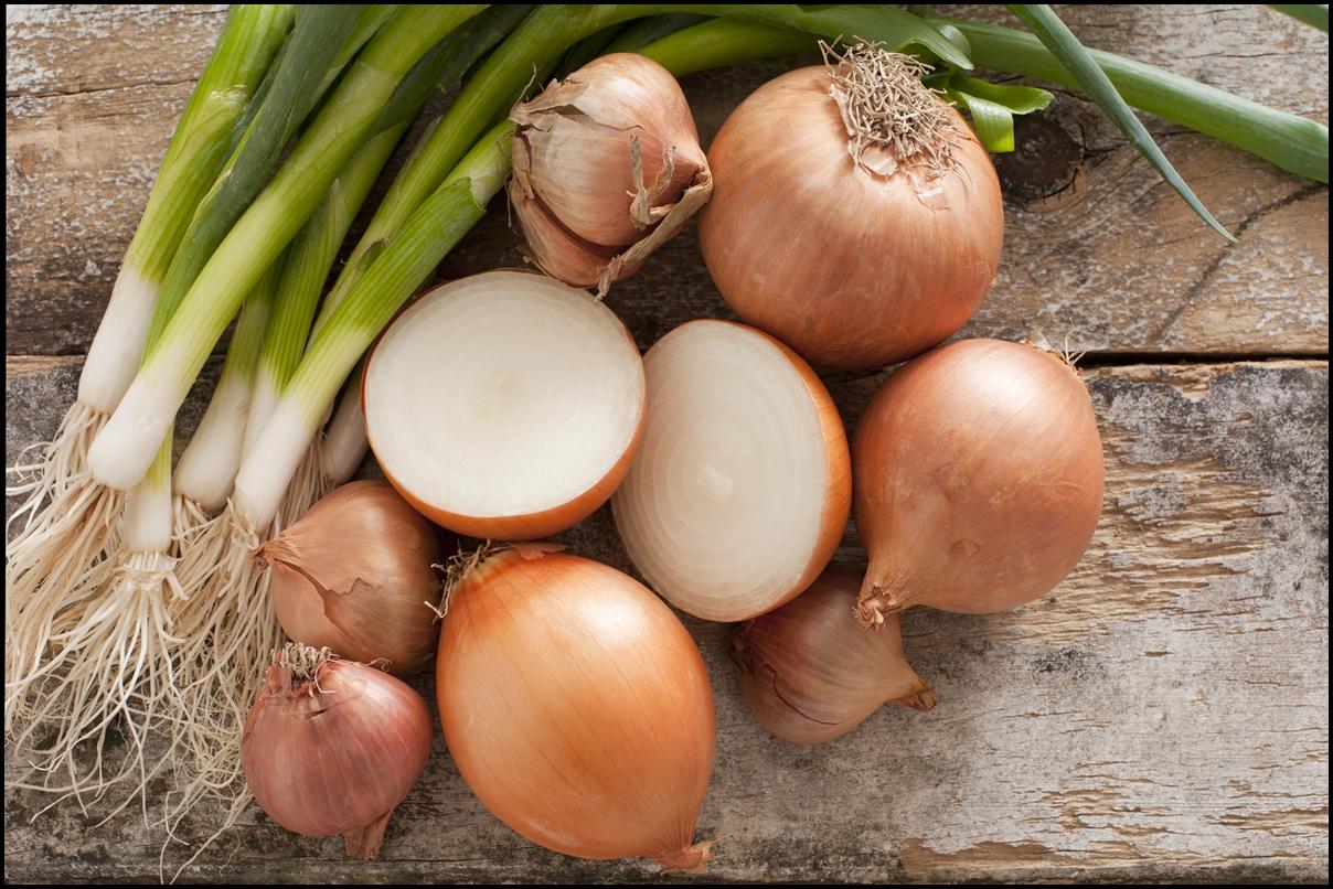 Как вырастить хороший урожай лука на грядке »  Дачные идеи и опыт садоводов