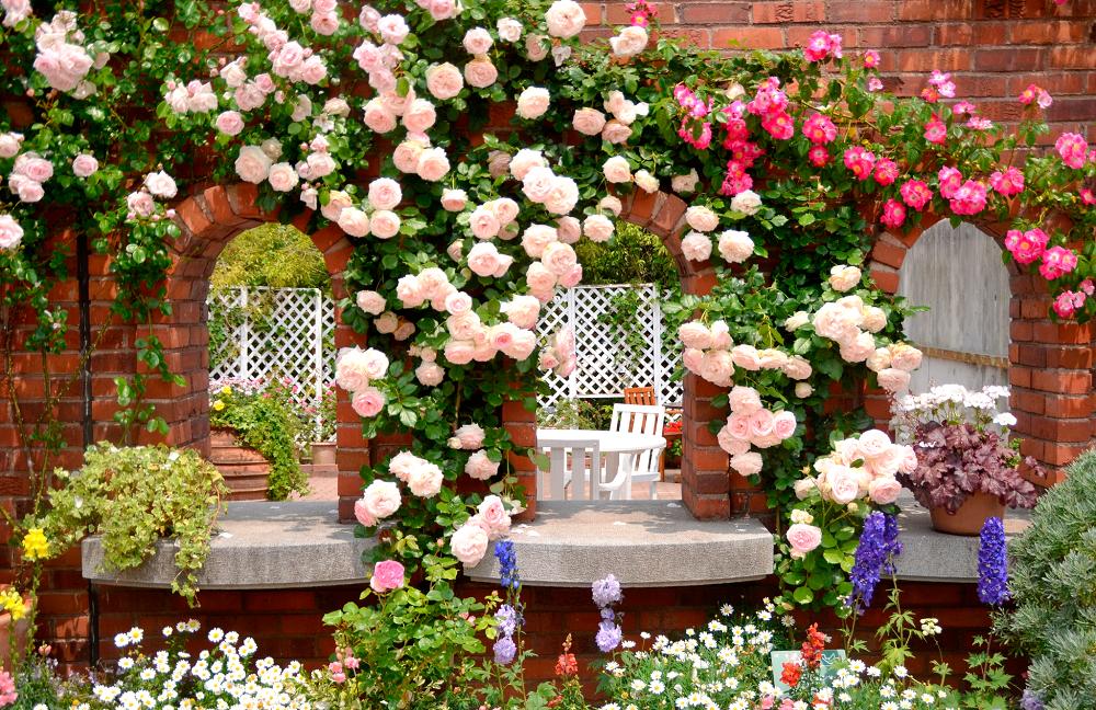 красивые садовые розы